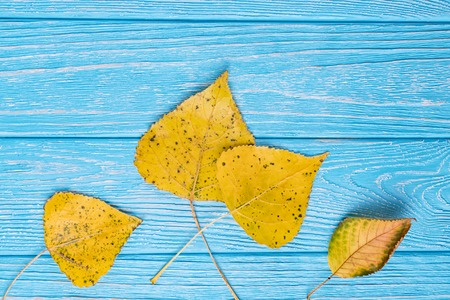 Hello autumn. Yellow autumn leaves on a blue wooden background. Free space