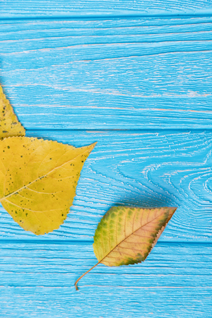Yellow autumn leaves on a blue wooden background. Free space Archivio Fotografico