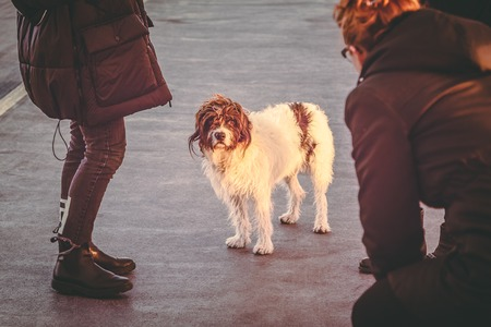 Shaggy dog with sad smart eyes looking up at woman. Evening light