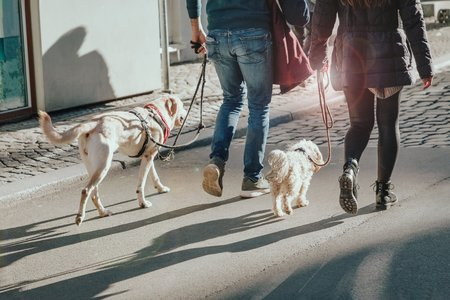 Couple walking with two dogs on the street. Lifestyle concept. Sun glare effect