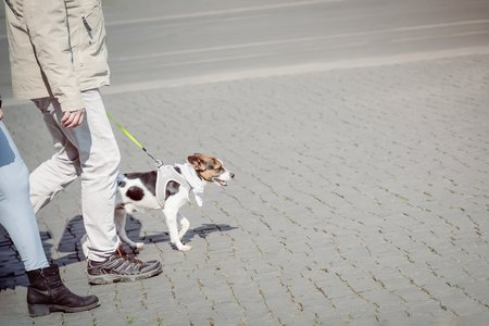 Couple walking with cute small dog on the street 写真素材