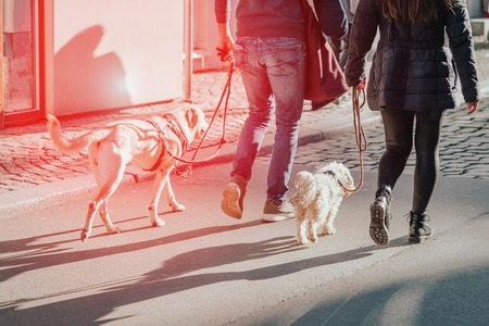 Couple walking with two dogs on the street. Lifestyle concept. Sun glare effect, red toned