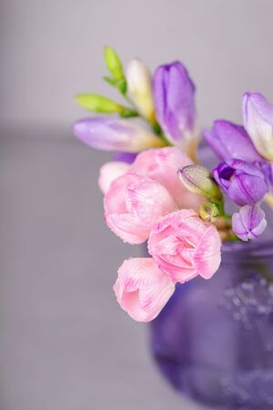 Fresh pink and violet freesia flowers with a water drops on a gray background. Copy space, vertical Archivio Fotografico