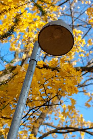 Lamppost on the background of autumn trees. The iron column, the lamp does not light. Sky is blue.