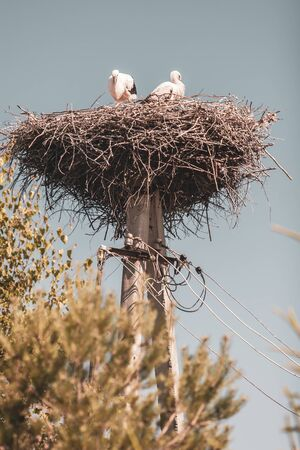 Two storks in a nest of branches on a pole. Double pole with wires. Imagens
