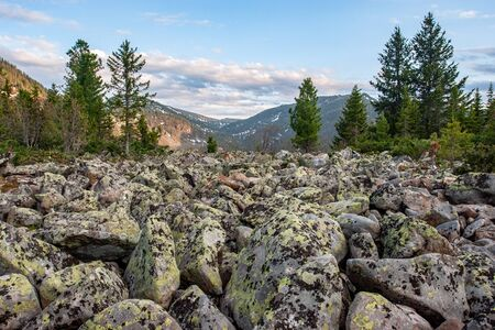 A view of the mountains through a rock river of large stones. Coniferous trees. On the stones, green and black moss. There are clouds in the sky.