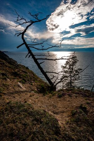 View of Lake Baikal with a tree on the very edge of a rocky cliff. On the blue sky behind the clouds is the sun. Backlight with sun rays through the clouds. Vertical frame.