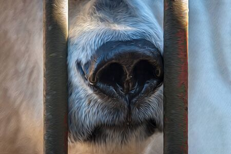 Oil painting stylization, the face and large nose of a polar bear in a cage is stylized as an oil painting. Sad animal in captivity. Vertical iron rods. Stock fotó - 130094307