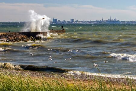 Landscape with a big burst of waves from the pier during the storm as a painted picture. Many seagulls fish near the shore in the waves. On the pier are people. The city of Tallinn and the ferry are visible on the horizon. Stock Photo