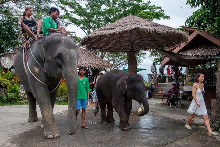 Phuket, Thailand - November 24, 2015: Tourists ride on elephants. Tourists are sitting on an adult elephant, and a little elephant calf is eating coconut. Business on an elephant farm. 報道画像