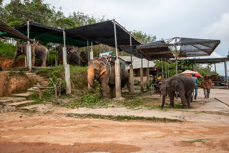 Phuket, Thailand - November 24, 2015: Business on an elephant farm. Elephants are waiting under the awnings of tourists who wish to ride.