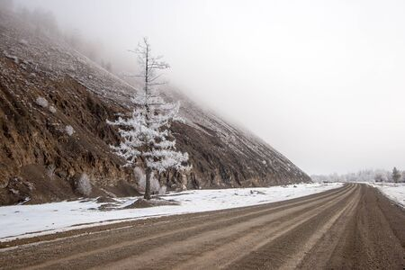 Winter coniferous tree in hoarfrost standing near the road under the mountain in the fog. Dirt road. Snow on the ground. Brown colors.