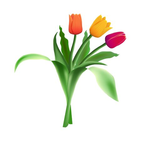 Three realistic vector beautiful tulips isolated on white background. Red, orange and yellow flower buds in a bouquet. Green long leaves.