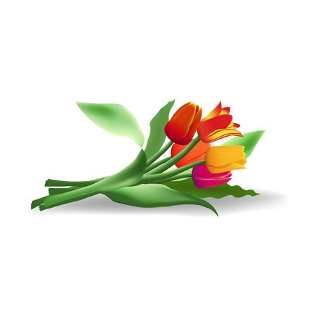 Lying bouquet of five realistic vector tulips with shadow isolated on white background. Red, yellow and purple flower buds. Green long leaves.