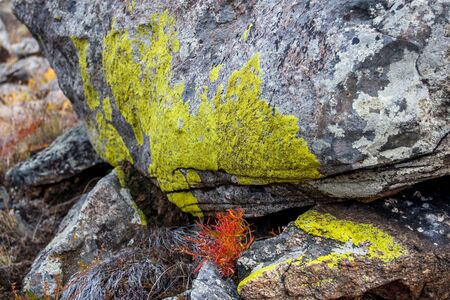 Green natural moss on the boulders in the steppe. A bunch of red grass grows between the stones. Granite stones.