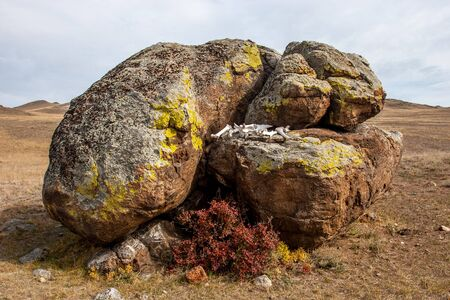 The white bones of the animal lie between large boulders in the form of an altar in the steppe. Red bush below. Brown tones. Cloudy The hills are behind. Reklamní fotografie