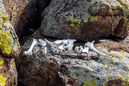 White bones of an animal with a skull lie on the stones. The bones are clean. Green moss on the stones.