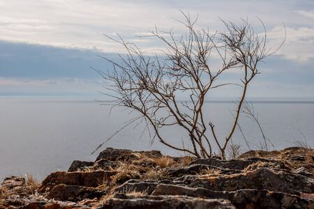 Bush without leaves on a rock against the background of the lake. Cloudy Clouds in the sky.