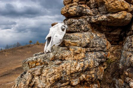 The skull of the animal lies on the stones. Elongated skull shape. A gloomy sky with clouds is visible. Horizontal. Reklamní fotografie