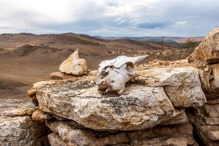 White skull of an animal on the stones. Steppe with hills in the distance. A gloomy sky with clouds is visible. Focus on the skull. Horizontal. Reklamní fotografie