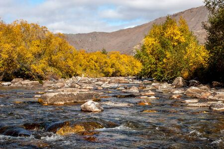 Mountain river with stones and autumn bushes along the banks. Yellow leaves on the trees. Mountains in the background. Clouds in the sky. Horizontal.