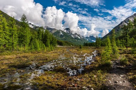 Wetland in the mountains. Grass in the water and coniferous forest nearby. High mountains in the background. Blue sky and low clouds over the mountains. Horizontal. Reklamní fotografie