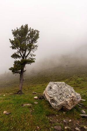 A large boulder and fir tree nearby on a mountainside in the fog. Green grass on the ground. Copy space. Vertical. Reklamní fotografie