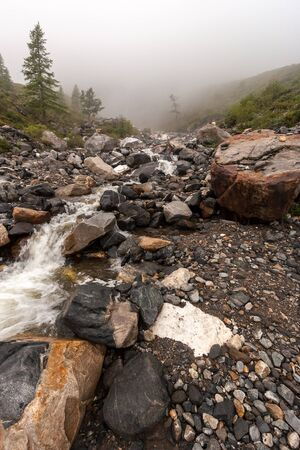 Mountain river flows out of the fog. Large boulders around the edges. Young spruce grow. Gloomy weather. Copy space. Vertical.