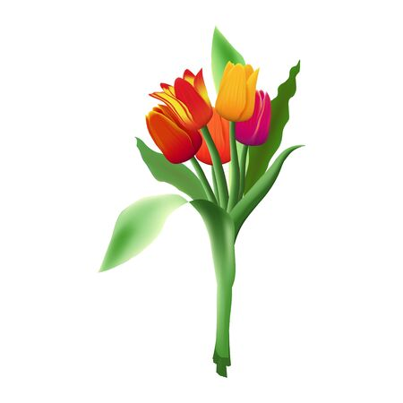Bouquet of five realistic vector tulips isolated on white background. Red, yellow and purple flower buds. Green long leaves.