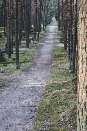 The road through the cemetery planted with tall trees. Trunks of coniferous trees. Vertical.