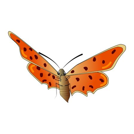 Butterfly isolated on a white background. View from below. A multicolored butterfly with a spotted pattern on red wings. Vector EPS10. 向量圖像