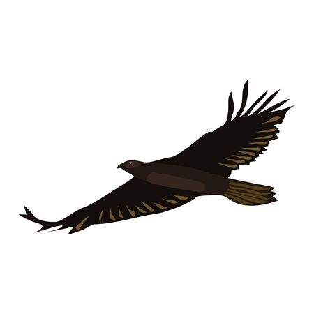 Flying eagle isolated on white. Brown big bird with spreading wings. Vector EPS10.