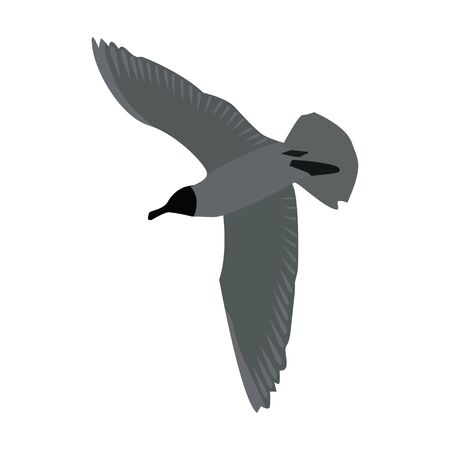 Bottom view of a flying seagull with spread wings isolated on white. Flying tern bird. Gray colors. Vector EPS10.