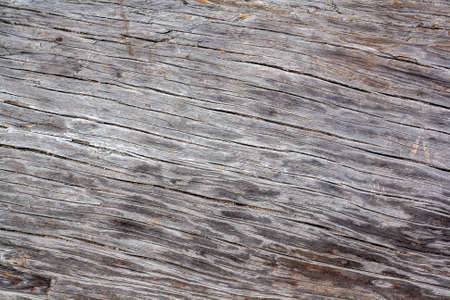 Background texture of trunk of old dry tree with cracks. Horizontal image. Standard-Bild