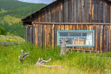 Old Russian wooden house with dry trees and tall grass around. Horizontal image.