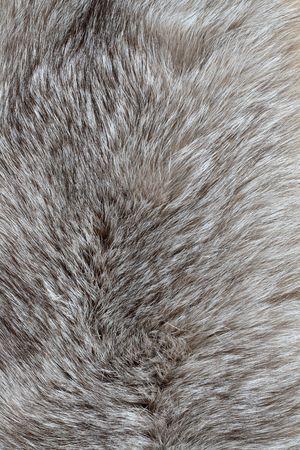 silver fox: Antecedentes agradable con pieles de zorro gris plata