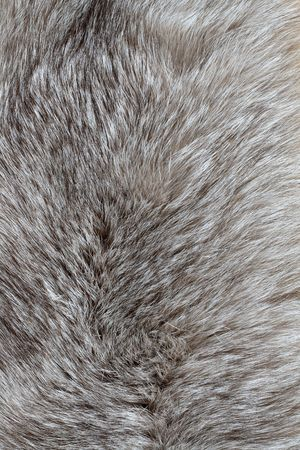 silver fox: Background with nice gray silver fox fur Stock Photo