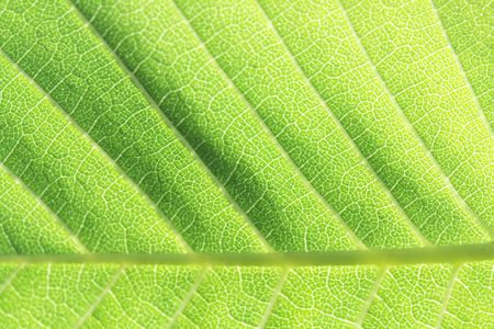 Nice nature background with closeup of green leaf photo