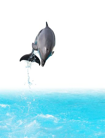 Dolphin jumping out of the water photo