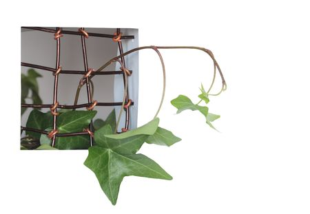 Green home plant growing through a window with metal grating. Isolated on white  Stock Photo - 6690531