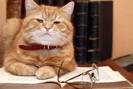 책 배경에 안경 근처의 오래 된 책에 누워 생강 고양이의 근접 촬영