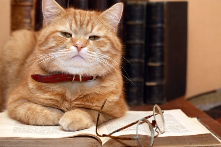 writers: Closeup of ginger cat lying on old book near spectacles on books background