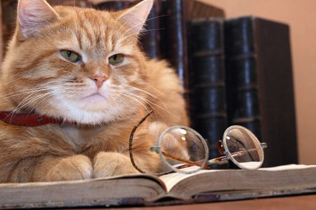 domestic cat: Closeup of ginger cat lying on old book near spectacles on background with books