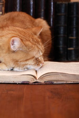 Closeup of ginger domestic cat slipping on very old book photo