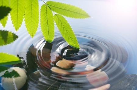 透明な水しぶき水の上の緑の葉を持つ美しい支店 写真素材