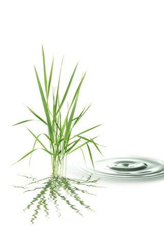 carex: Nature concept. Bunch of green grass near splashing water on white background