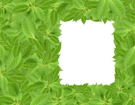 Nature concept. Green leaves background with hole for your images or text.Clipping path is included Stock Photo - 10450430