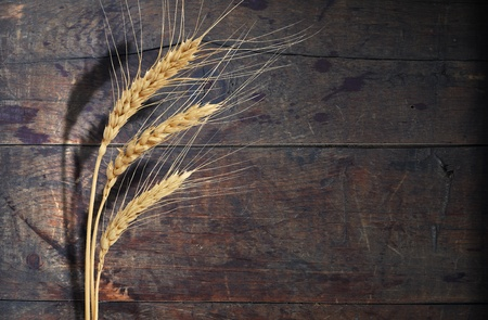 maturing: Farm concept. Ear of wheat with shadow on old wood background