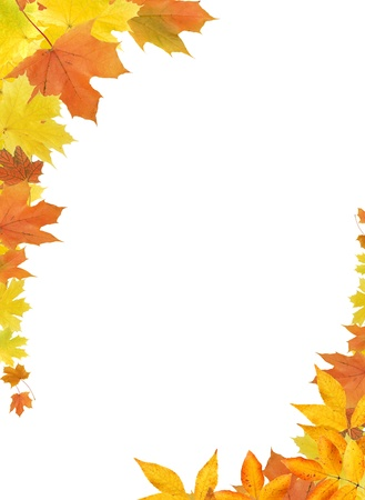 Nice border made from color falling maple leaves