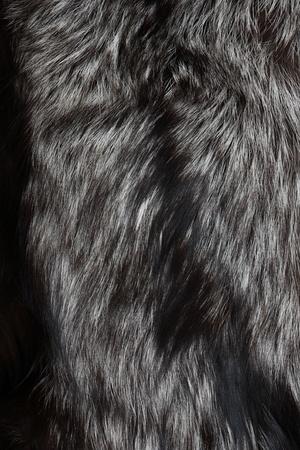 silver fox: Closeup of natural silver fox fur.